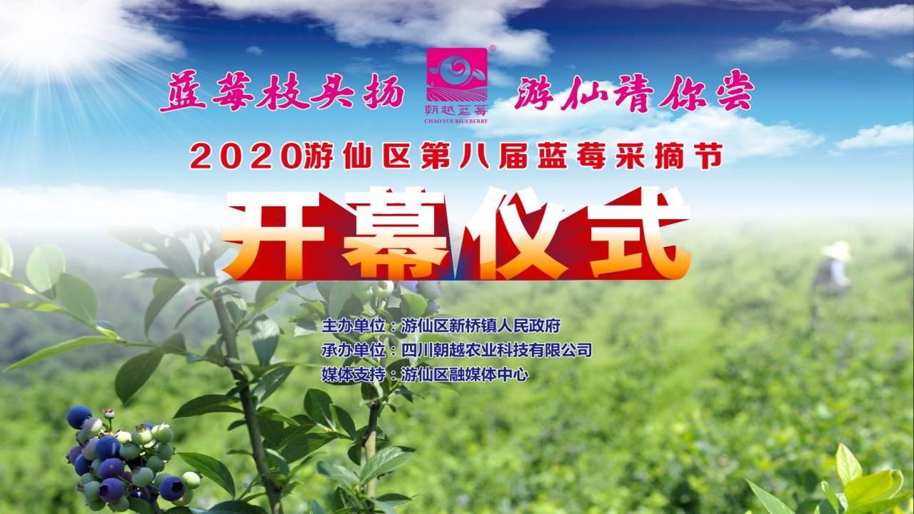 游仙區第八屆藍莓采摘節朝越藍莓直播帶貨
